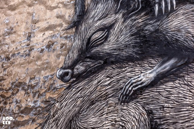 racoon painting by mark rigney