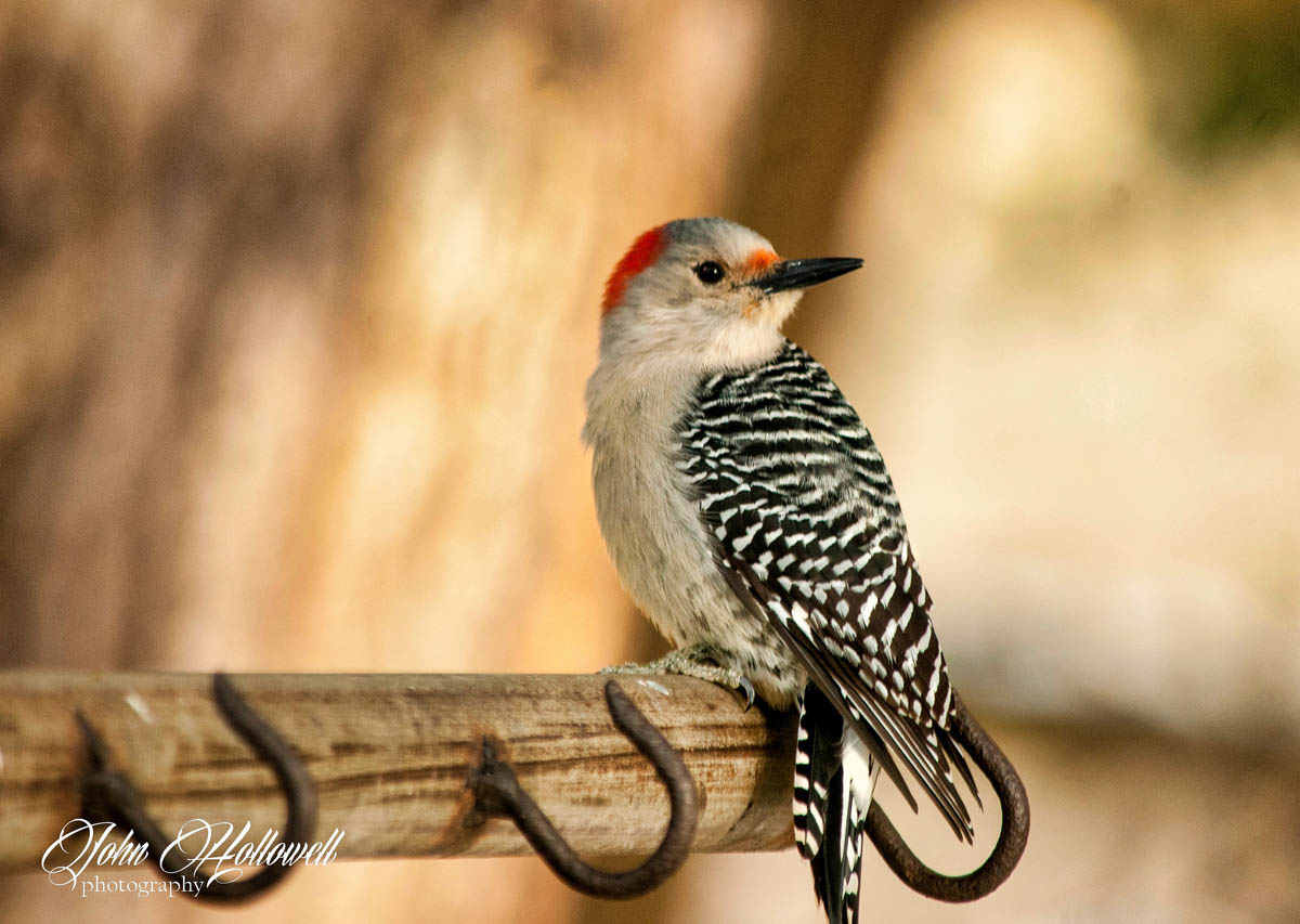 waiting bird photography by john hollowell