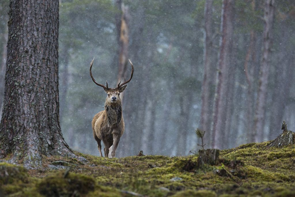 wildlife scottish photographer of the year by rebecca