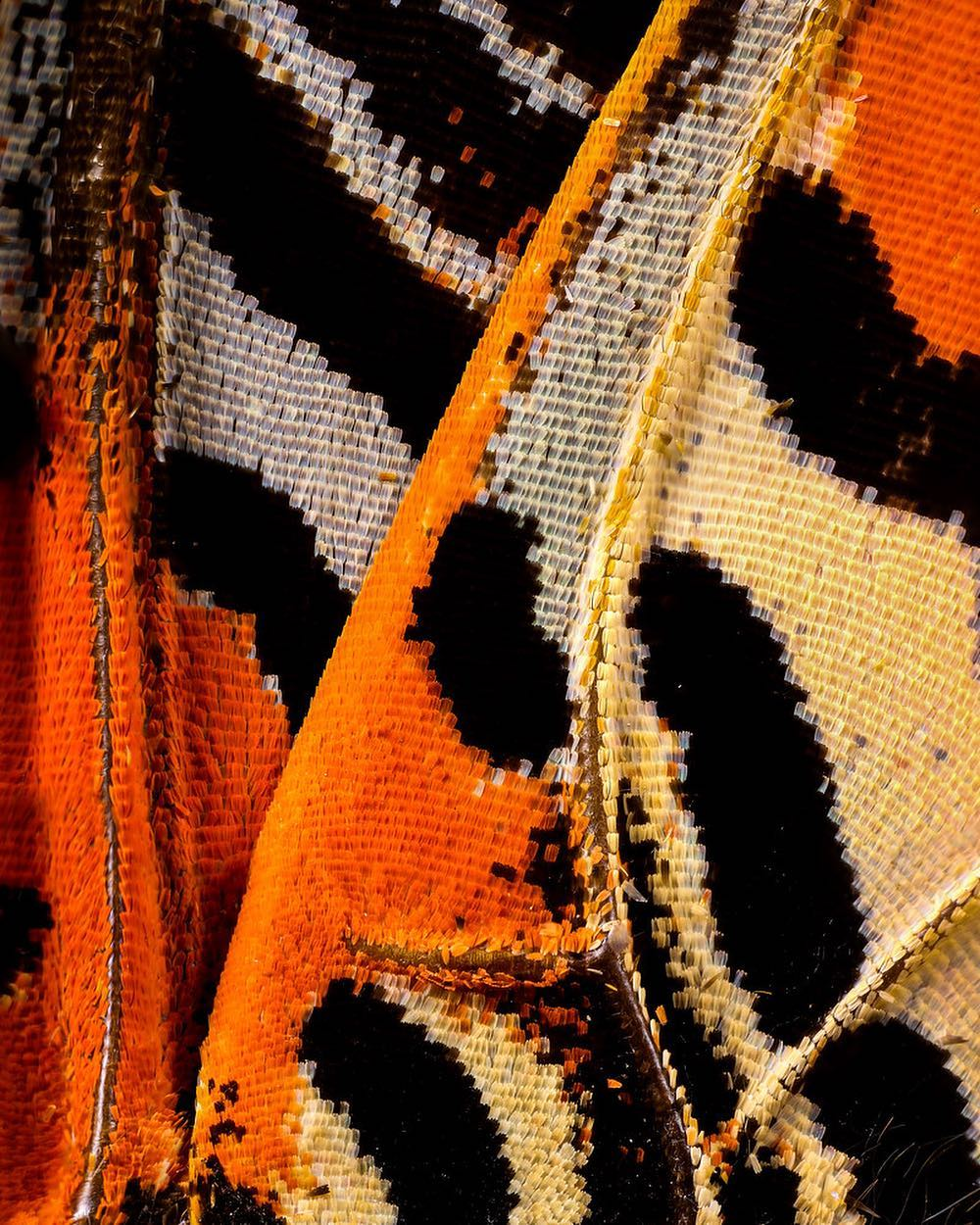 macro photography butterfly by chris perani