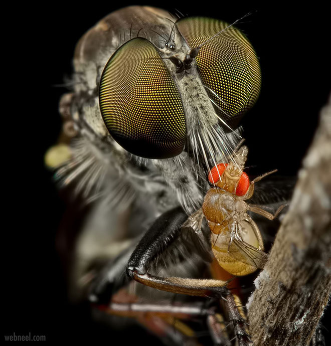 macro photography housefly