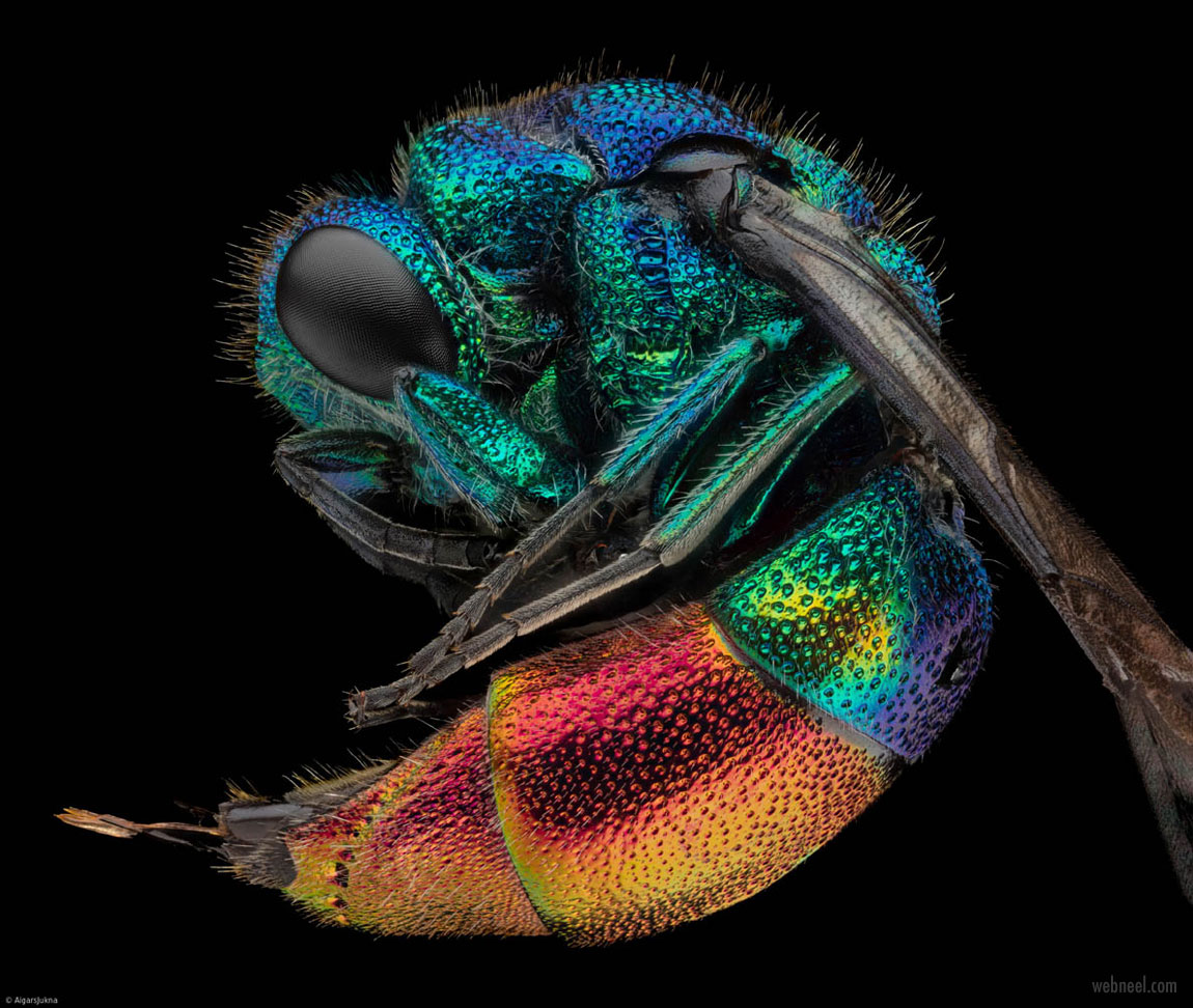 macro photography bright wasp