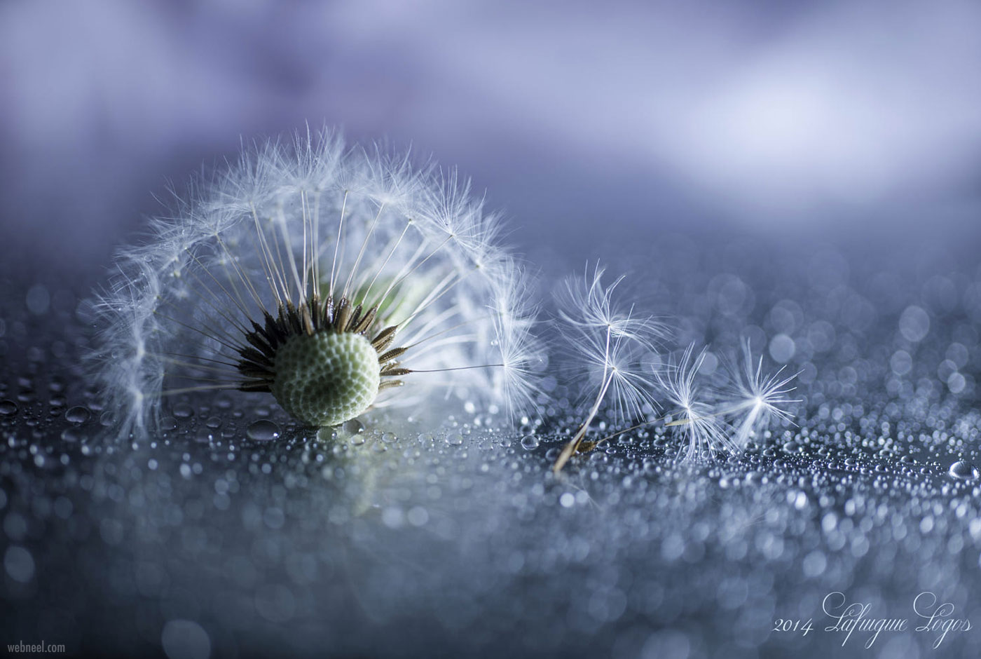 macro photography by by lafugue logos