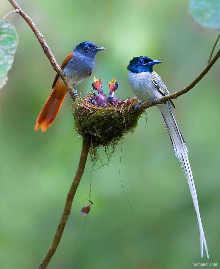bird photography by lawrence neo