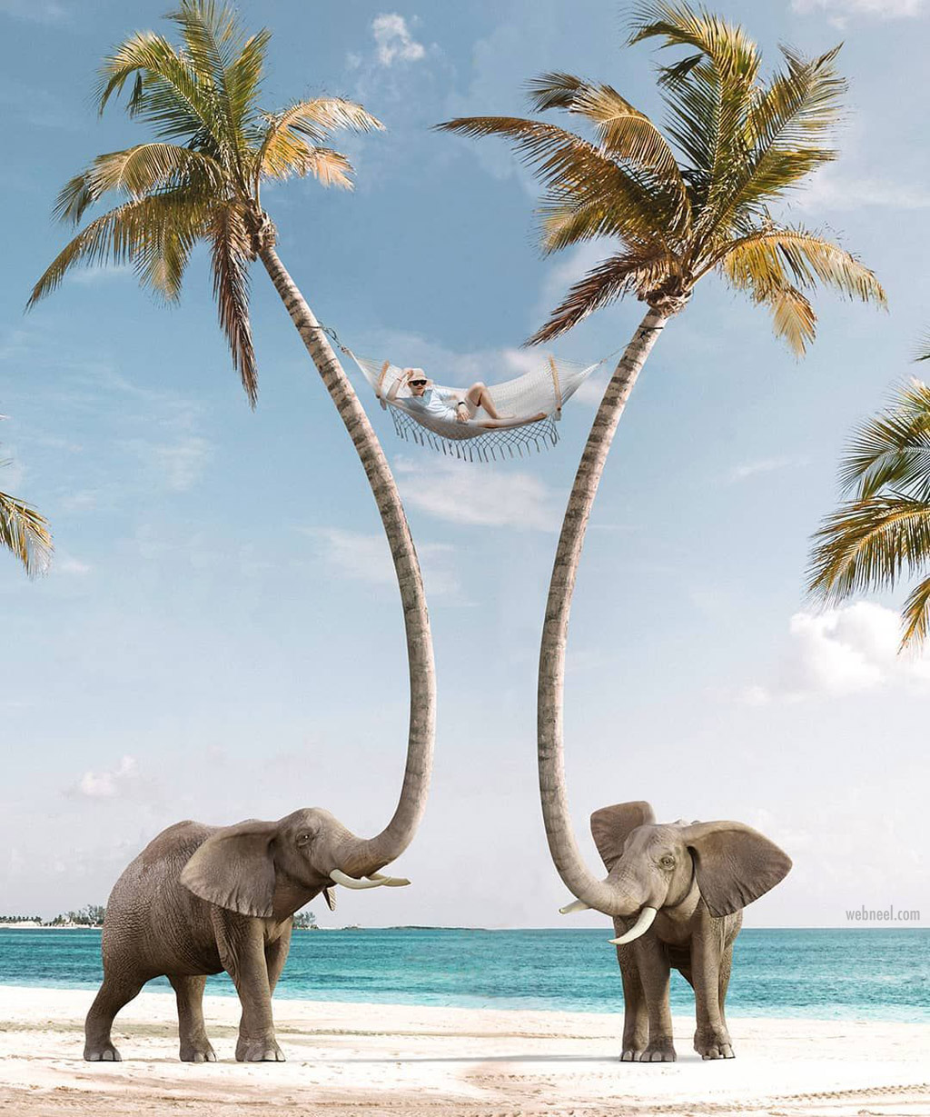 photo manipulation elephant coconut tree by martijn schrijver