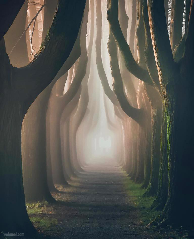 tree photography landscape by max lazzi