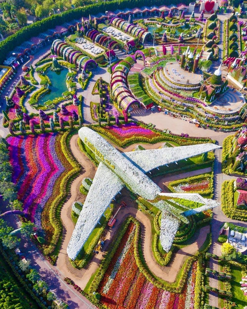 beautiful garden dubai miracle garden photo by lostmagpie