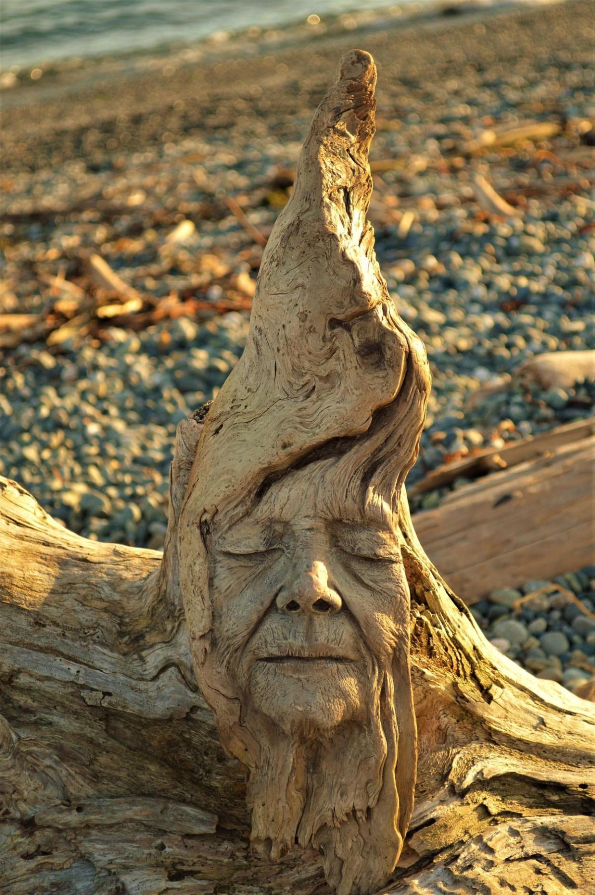 driftwood sculptures discarded wood by debra bernier