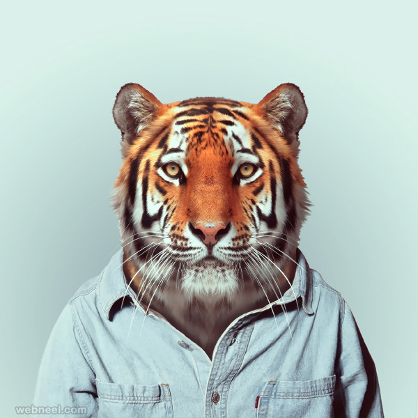 tiger portrait photography