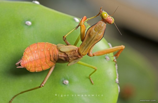 macro photography by igor siwanowicz