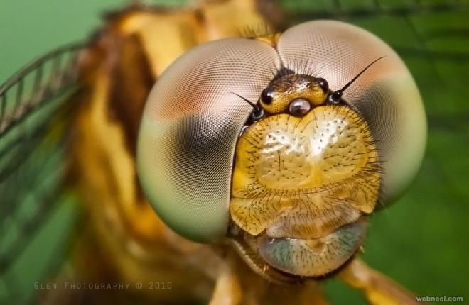macro photography by glen espinosa