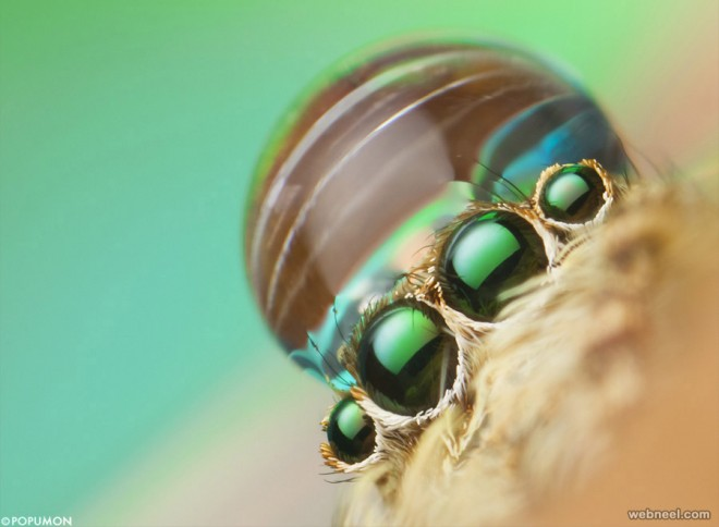 macro photography by popumon