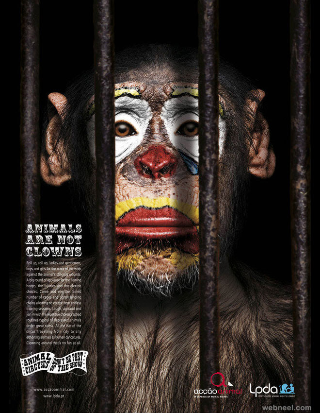 animal clown photo manipulation