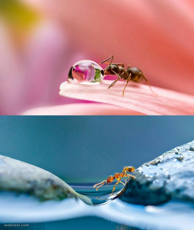 macro photography by milki asai