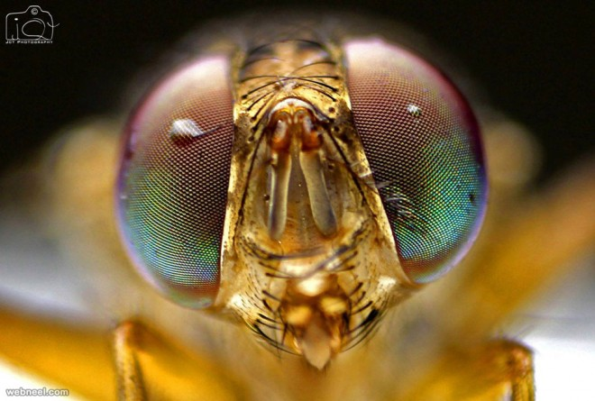 macro photography by jct