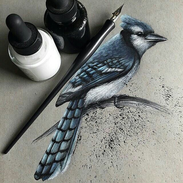 beautiful bird drawing