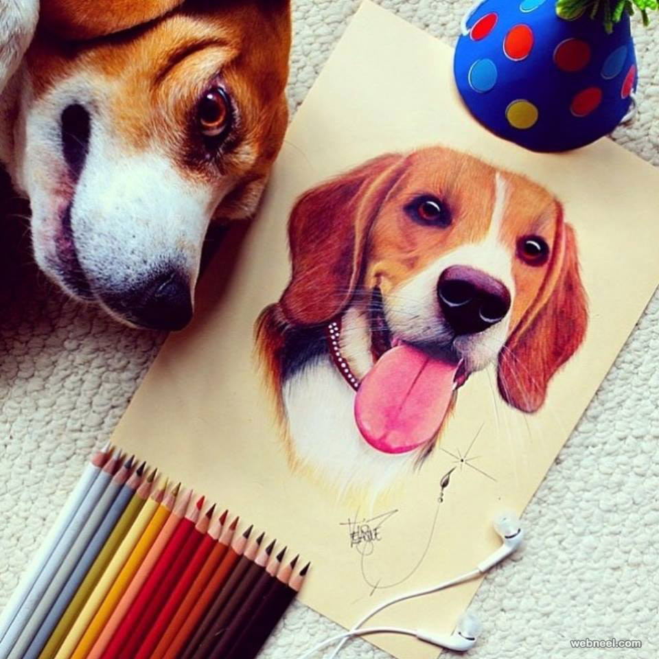 Dog Color Pencil Drawing By Santiago Velasquez