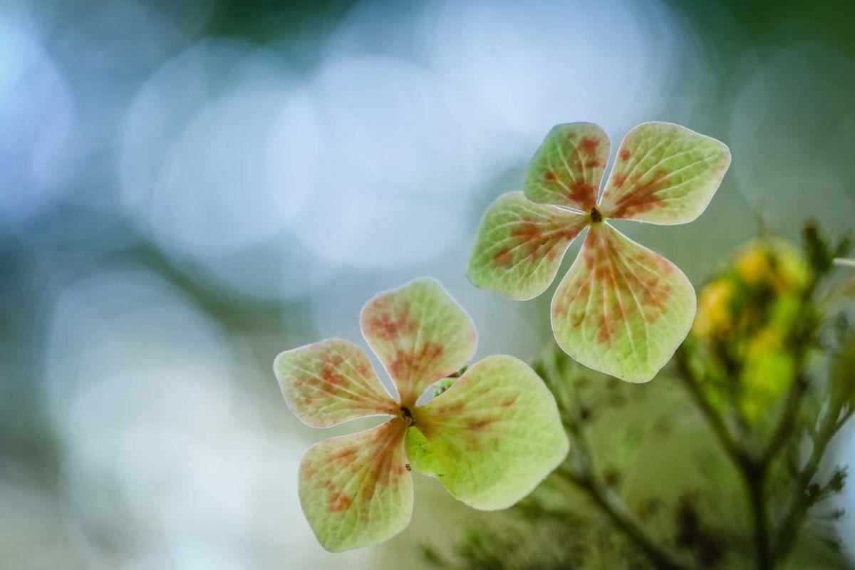 young garden photographer international garden photographer by claire