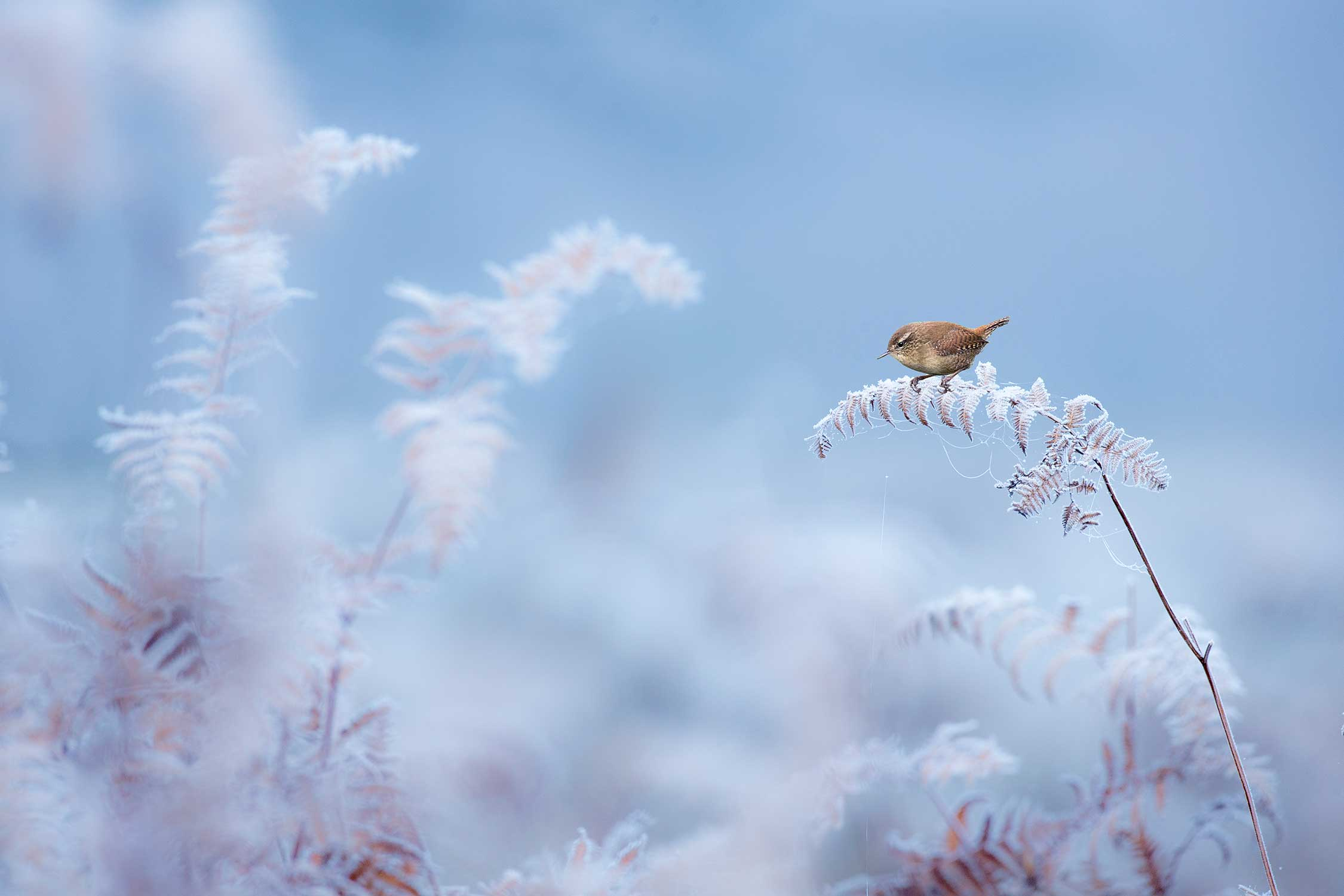bird frozen british wildlife photography award by ben hall