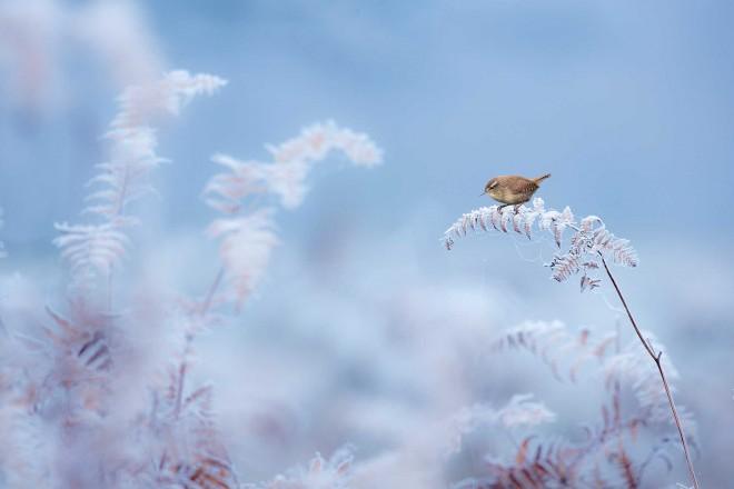bird frozen british wildlife photography award by ben hall