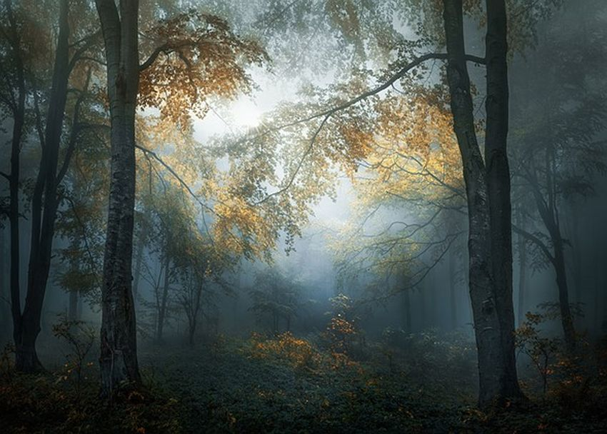 open sony photographer of the year by veselin atanasav