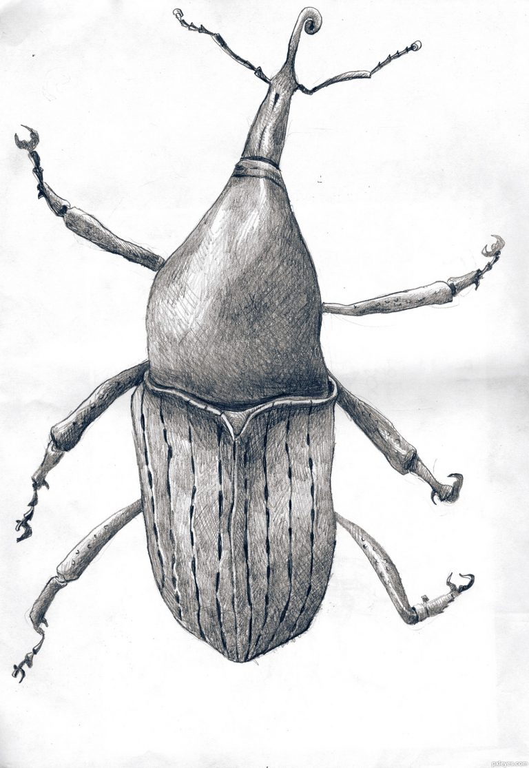 bug scientific drawing by finn