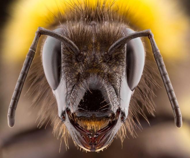 mosquito british wildlife photography award by keith trueman