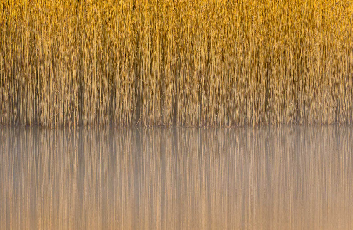 reeds british wildlife photography award by steve palmer