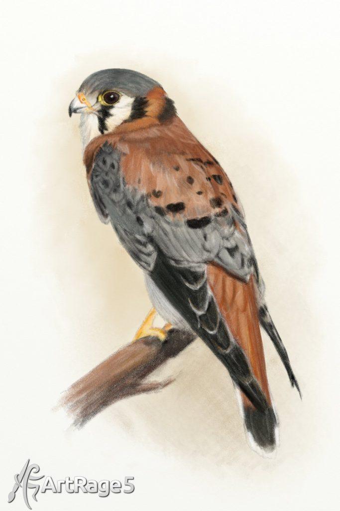 bird artrage painting by kestrel