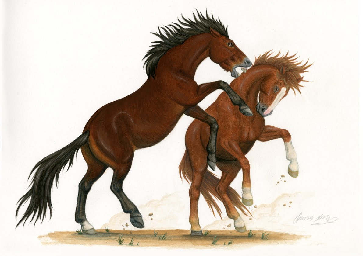 horses scientific illustration by rosemary stacey