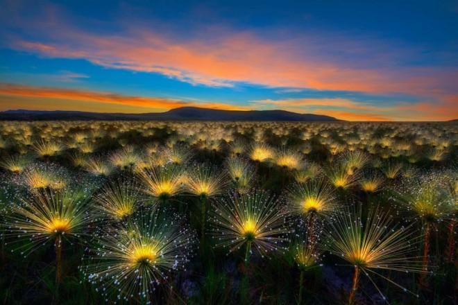 wildflower award winning garden photography by marcio