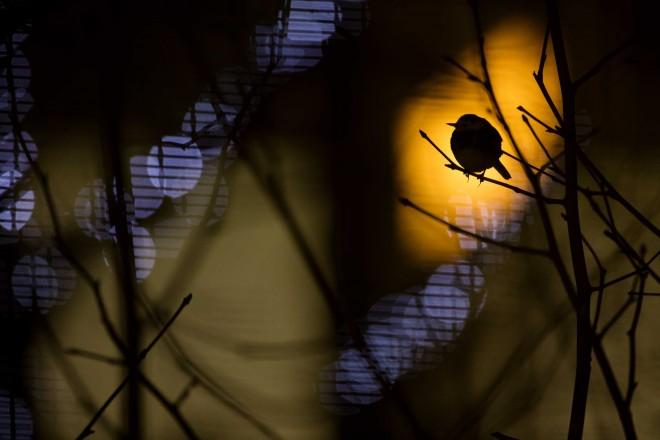 humming bird british wildlife photography award by daniel trim