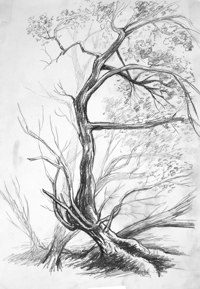 swaying oak tree nature drawing by finn