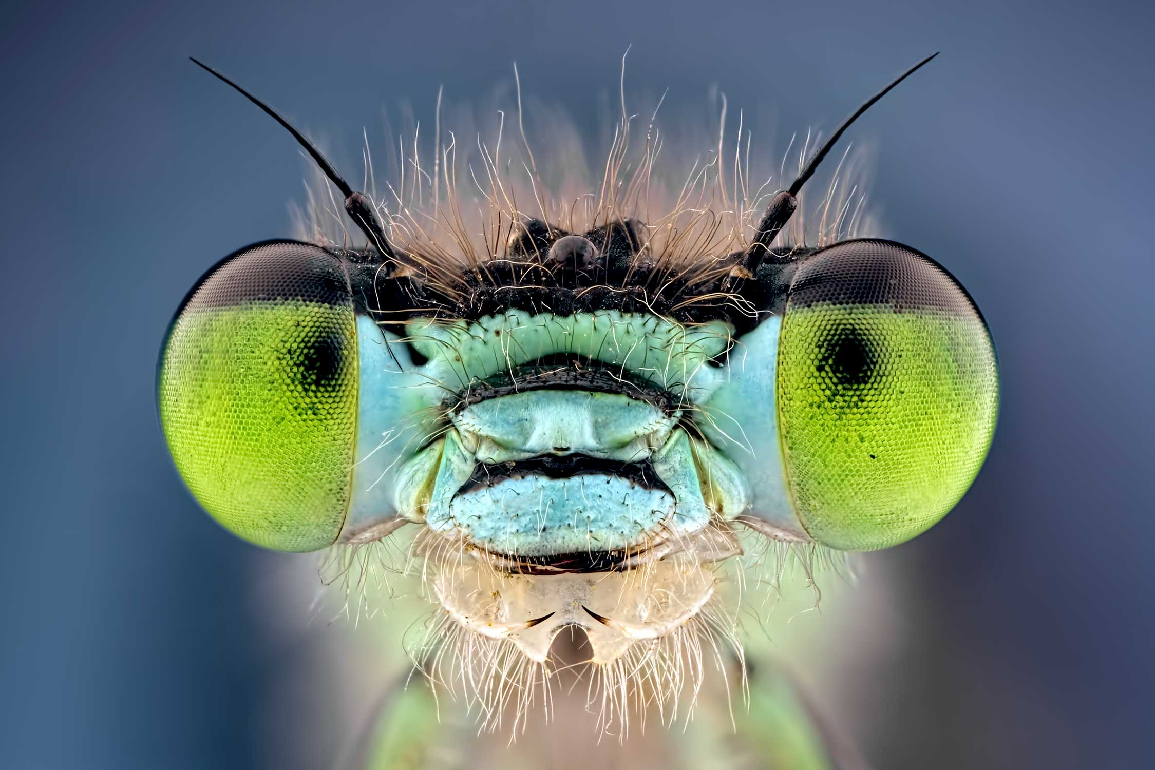 macro life british wildlife photography award by keith trueman