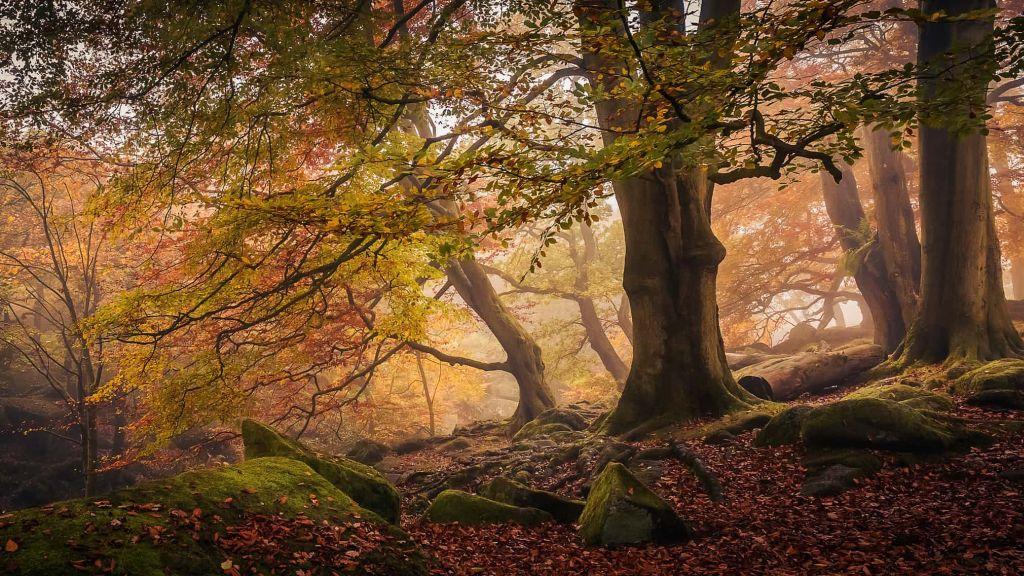trees woods forests international garden photographer