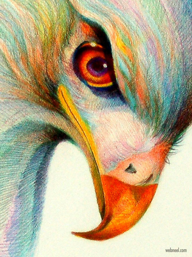 colored pencil drawing eagle by gerry segismundo