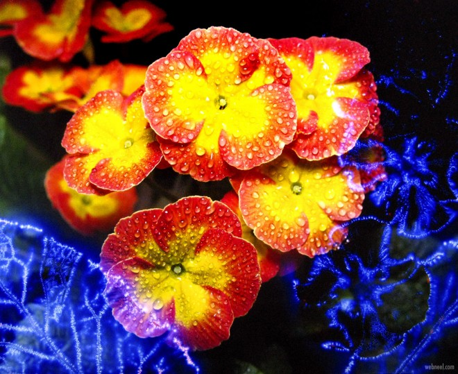 kirlian photography flowers by larry simpson