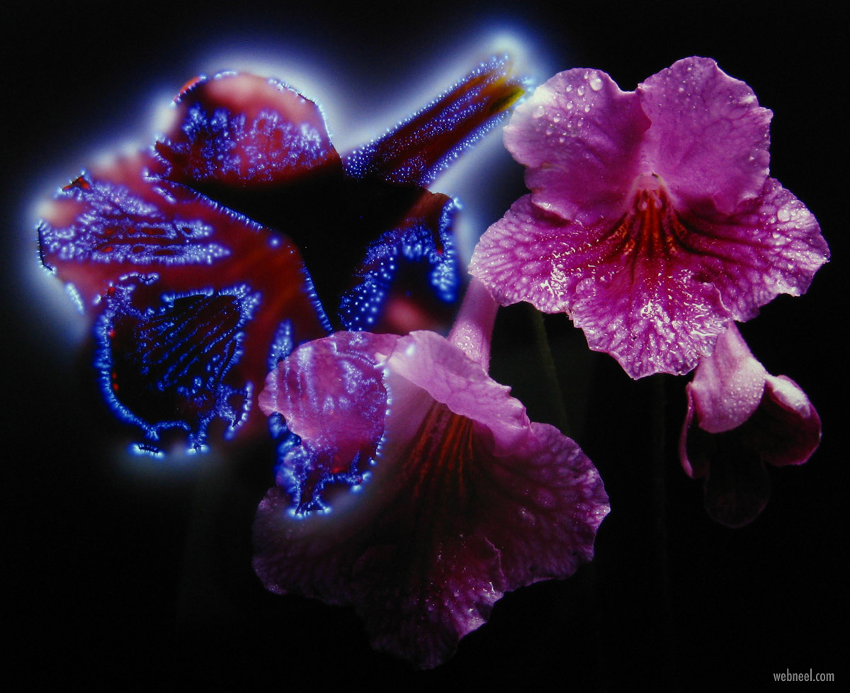 kirlian photography flowers