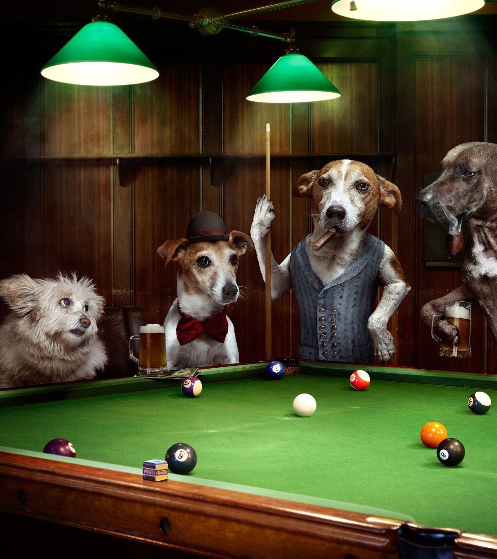 photo manipulation dog by lime house creative