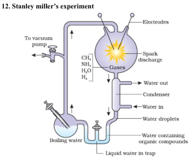 diagrammatic drawing of stanley millers experiment