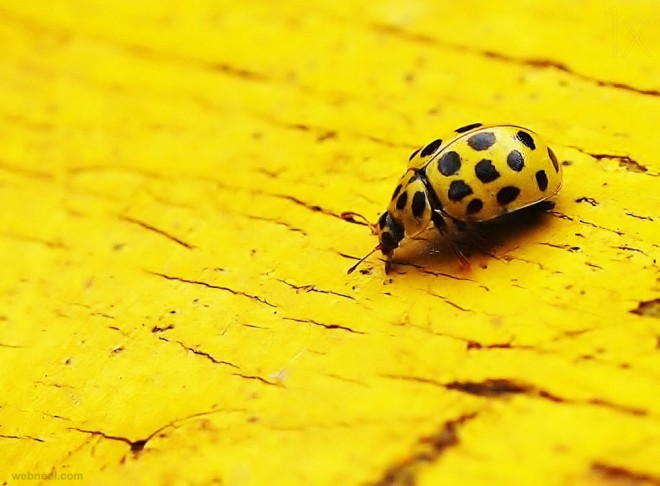 best yellow themed photography