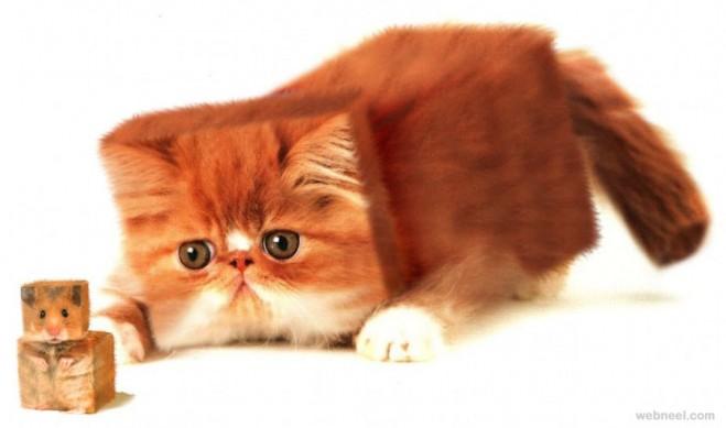 cubism photo manipulation cat