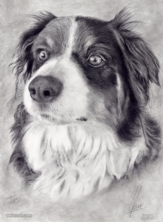 dog drawing art