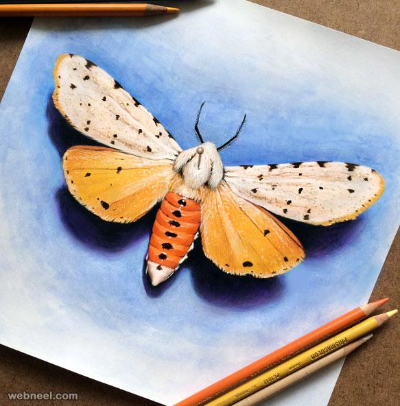 color pencil drawing by morgan davidson