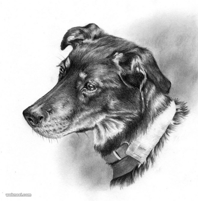dog drawing by taran