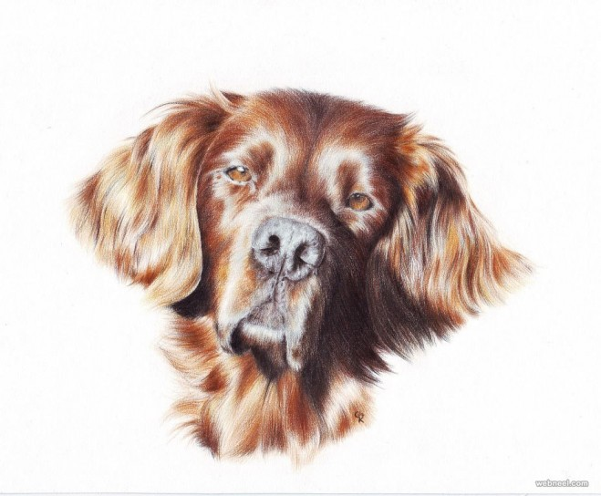 dog drawing by ckart