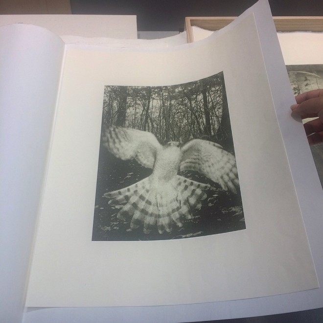 collotype photography printing by stephen gill