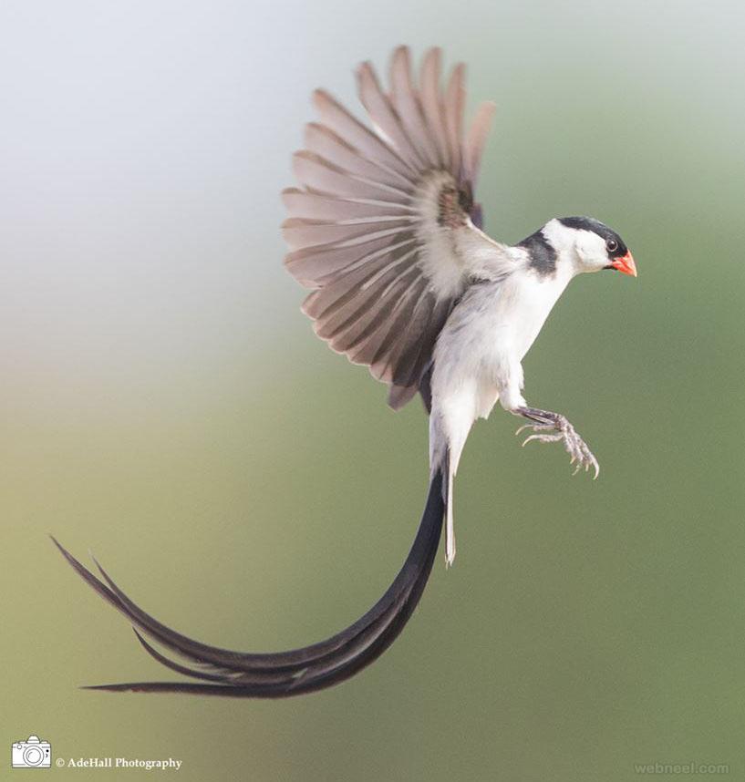 bird photography beautiful photo adehall