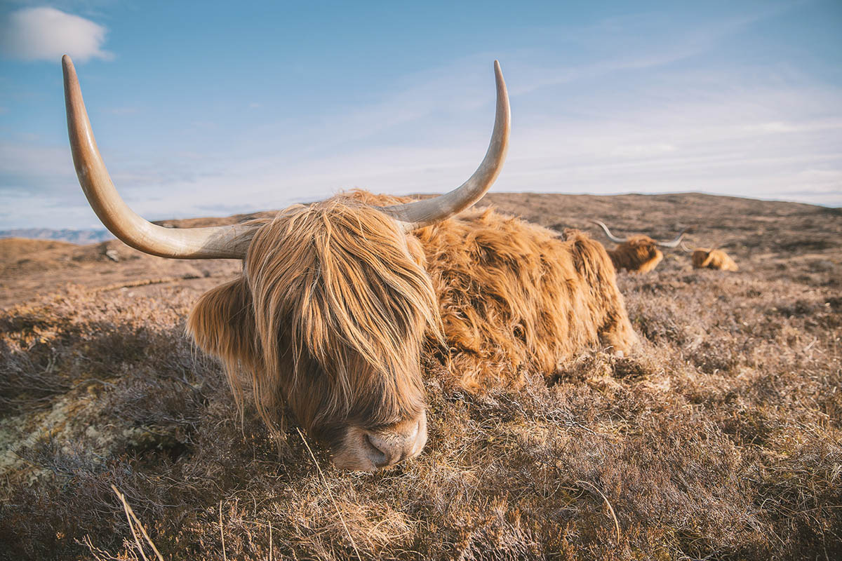 wildlife photography isle of skye by clement lefer