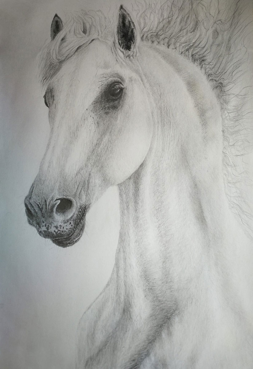 Pencil Drawing Realistic White Horse By Ivan Kamenski